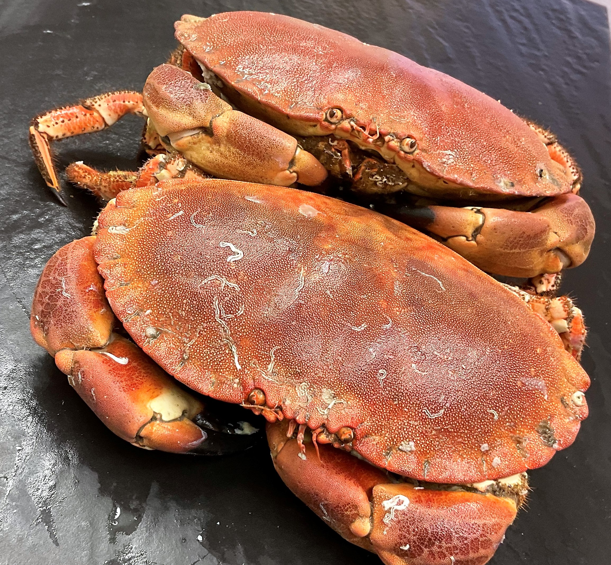 cooked whole crab